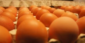 Výroba vajec
